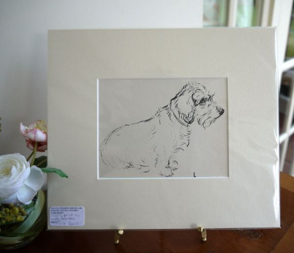 Little Wire Haired Dachs - Dax D1 -   1930's print by Lucy Dawson